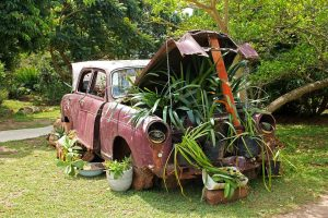 Old rusty car with lots of plants growing in it